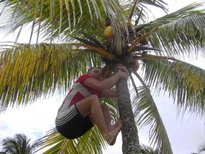... wer hat die Kokosnuss geklaut