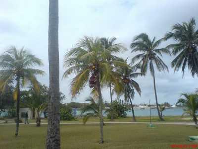 Wer hat die Kokosnuss...